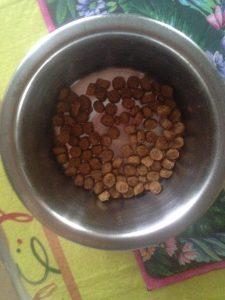 Отзыв о корме Pro Plan для котов