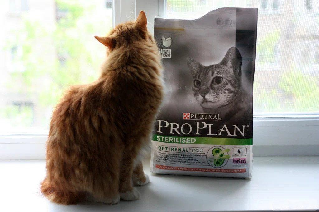 Отзыв о корме для кошек ПроПлан