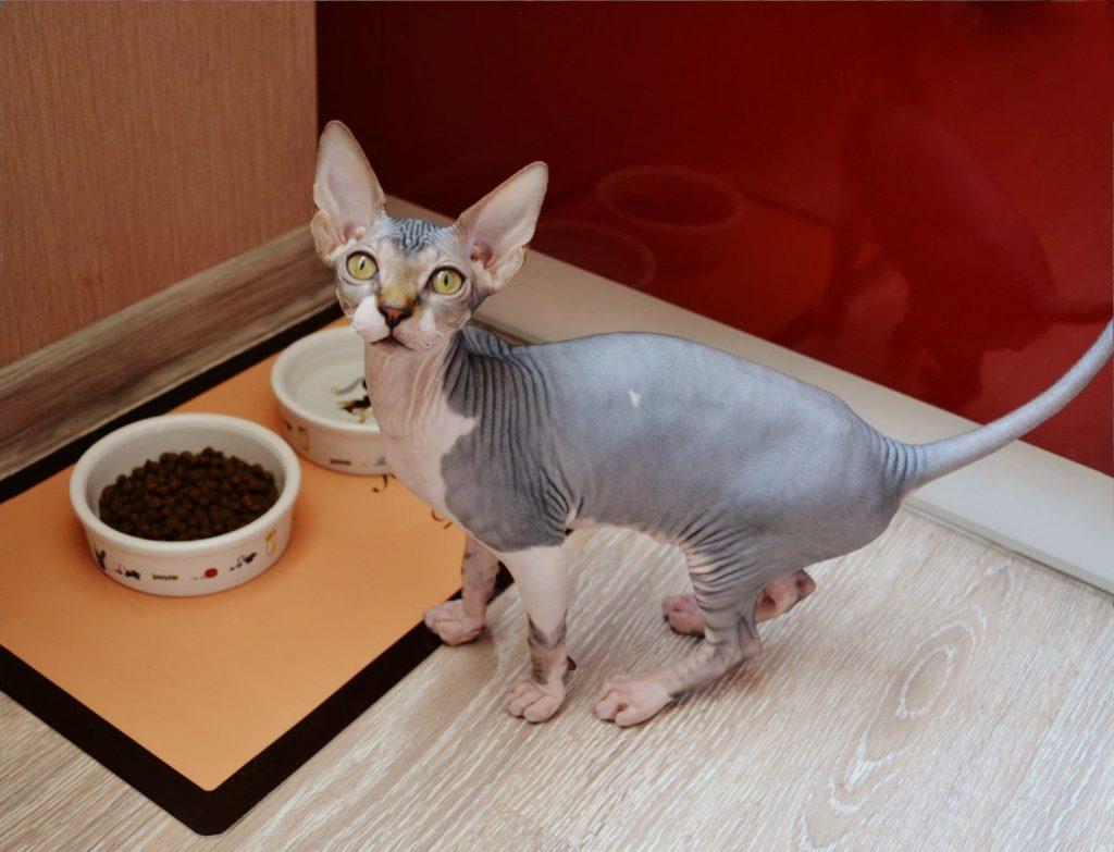 Отзыв о сухом корме для кошек Brit Care
