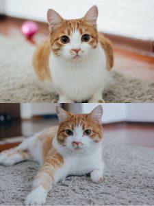 Кошка которая ест Farmina N D