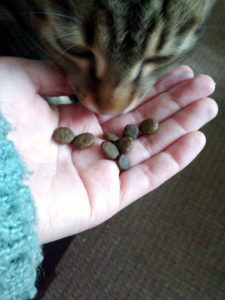 Отзыв о корме для кошек AATU
