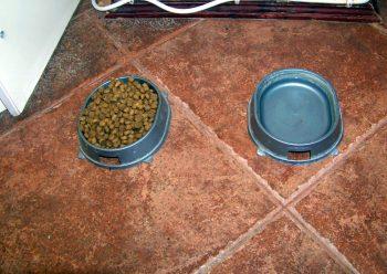 Отзыв о сухом корме Hills Science Plan для кошек