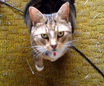 Отзыв о сухом корме Blitz для кошек