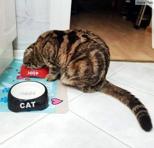Кошка ест корм Husse