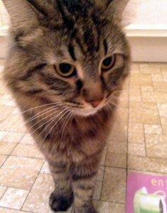 Кошка которая ест консервы Доктор Клаудерс