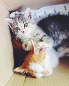 Котята которые едят корм Canagan