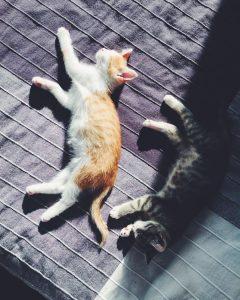 Котята которые едят сухой корм Canagan