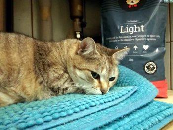 Отзывы о корме для кошек Husse