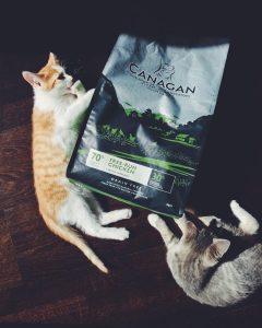 Отзывы о корме для котят Canagan