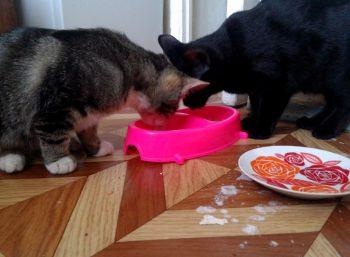 Отзывы о влажном корме для кошек Беркли