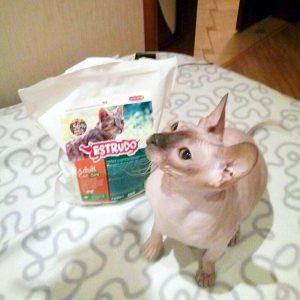 Отзыв о корме для кошек Estrudo