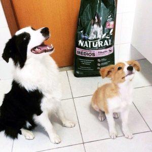 Отзыв о корме для собак Guabi Natural