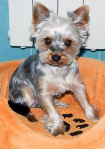 Собачка которая ест Guabi Natural для собак