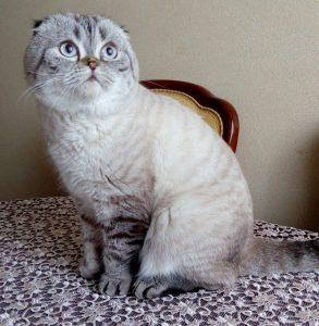 Кошка которая ест корм Flatazor