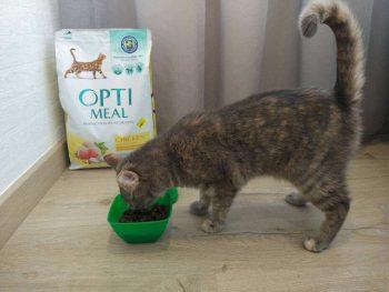 Кошка ест корм Оптимил