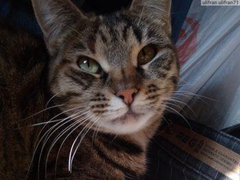 Кошка которая не стала есть корм Маурицио
