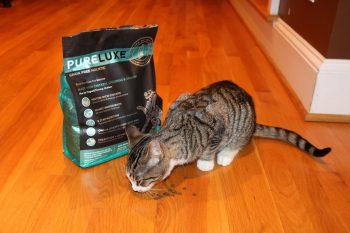 Котик ест сухой корм ПуреДулюкс