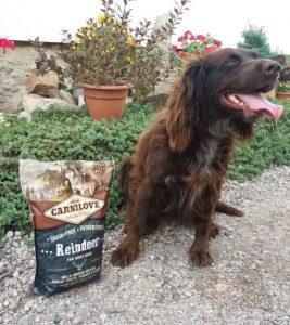 Отзывы о корме для собак Carnilove