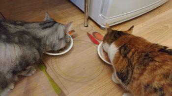 Кошки едят влажный корм для кошек Applaws