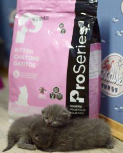 Отзывы о корме ProSeries для котят