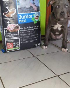 Отзывы о корме для щенков Belcando