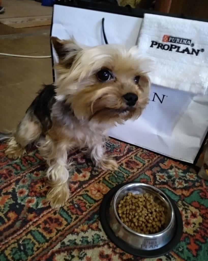 Собачка ест корм ProPlan